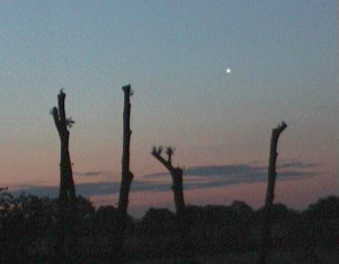 Venus with lopped trees (Copyright Martin J Powell, 2004)